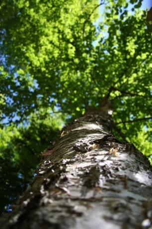 arbre de sagesse