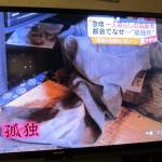 テレビ放映(TBS.Nスタ)6